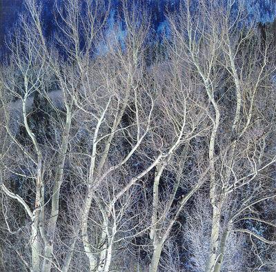 Christopher Burkett, 'Swirling White Winter Aspen, Colorado', n.d.