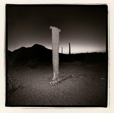 Richard Misrach, 'No. 3 from Saguaro Suite', 1975