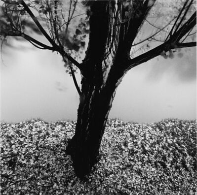 Michael Kenna, 'River Willow, Study 2, Strasbourg, France', 1993