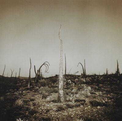 Richard Misrach, 'Saguaro Cactus, 1975; and three others', 1975