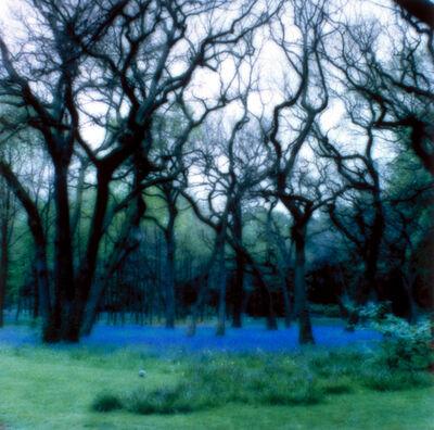 Lynn Geesaman, 'Bagatelle, Paris (5-95-2c-8)', 1995