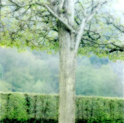Lynn Geesaman, 'Freyr Garden, Belgium (4-04-32c-12)', 2004