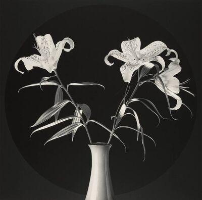Robert Mapplethorpe, 'Lilies', 1984
