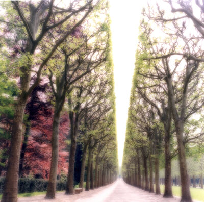 Lynn Geesaman, 'Parc de Sceaux, France (4-07-6c-9)', 2008