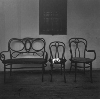 Pentti Sammallahti, 'Untitled, (Cat sleeping on chair)', 2006