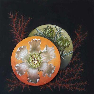 Marino Calesini, 'Acanthosicyos horrodus', 2020