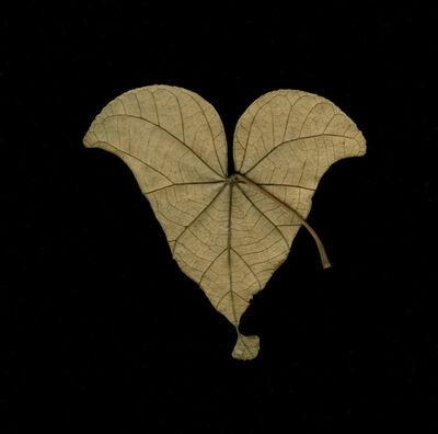Meridel Rubenstein, 'Singapore Equilateral Leaf', 2010