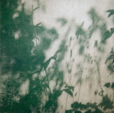 Barnaby Hosking, 'Walled Garden IV', 2014