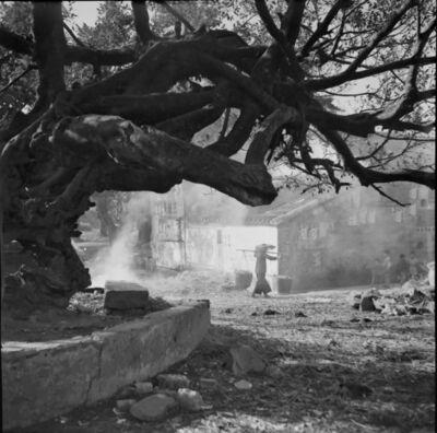 Fan Ho, ''Tree of Life 生命樹' Hong Kong', 1950/60s