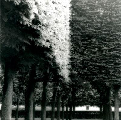 Lynn Geesaman, 'Parc de Sceaux, France (4-07-7-2)', 2007