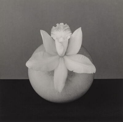 Robert Mapplethorpe, 'Orchid, 1987', 1987