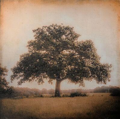 Kate Breakey, 'Live Oak, Spring, Plum Creek, Texas'