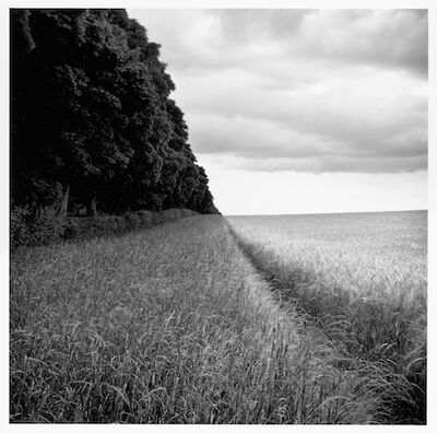 Paul Hart, 'Anmer', 2009