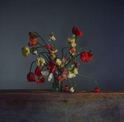 Richard Learoyd, 'Flowers, Day 3', 2019