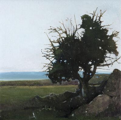 Robert Pollien, 'Juniper, Saratoga, Wyoming', 2018
