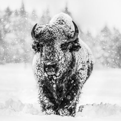 David Yarrow, 'Winter's Coming', 2020