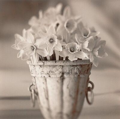 Brigitte Carnochan, 'Pot of Daffodils', 2002