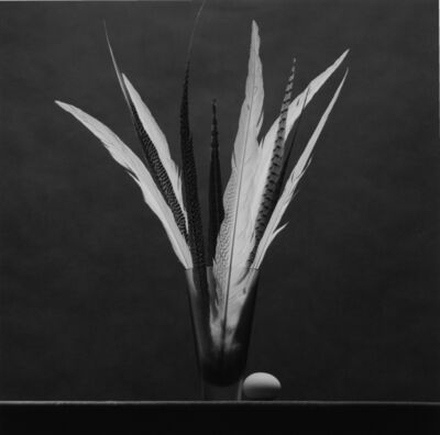 Robert Mapplethorpe, 'Feathers and Egg', 1985