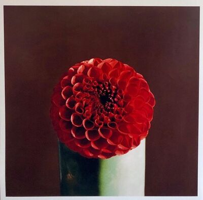 Peter C. Jones, 'Red Dahlia Flower Large Format Photo 24X20 Color Photograph Beach House RI', 2000-2009