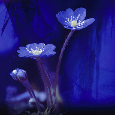 Maya Eizin Öijer, 'Blue Spring', 2009