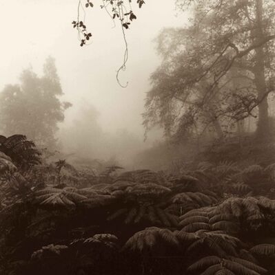 Cathy Shine, 'Kalopa Forest'