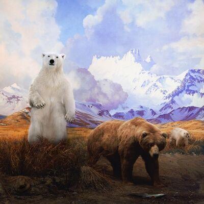 Anne Zahalka, 'Polar Bear, Grizzly Bear and Grolar Bear', 2017