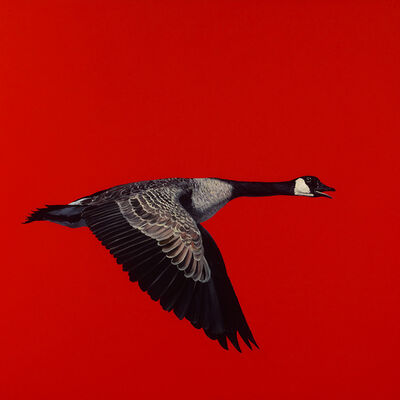 James Lahey, 'Canada Goose (from Made in Canada) 180914-03', 2018