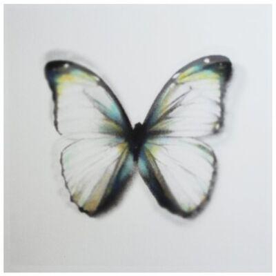 Stefania Ricci, 'Butterfly brux 02', 2016