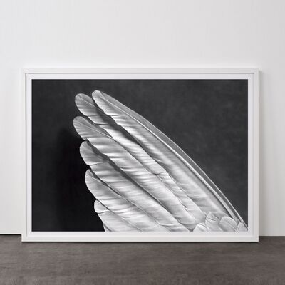 Robert Longo, 'Angel´s Wing (Small Version)', 2013