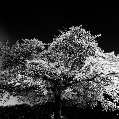 Toshio Enomoto, '022 - Yoyogi Park on a dark night', 1998