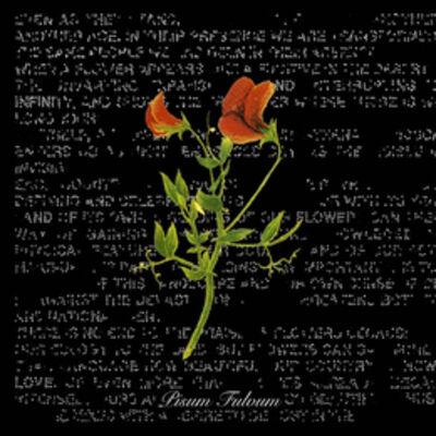Ottonella Mocellin - Nicola Pellegrini, 'Flowers of Palestine (Pisum Fulvum)', 2009
