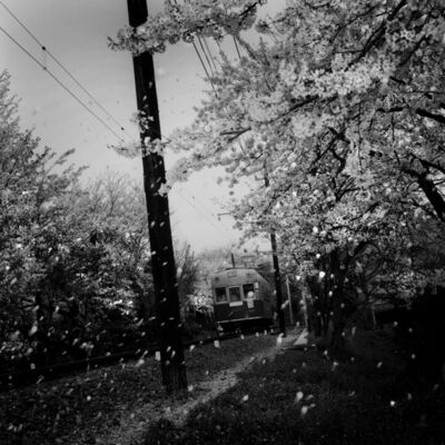 Toshio Enomoto, '052-Randen tram passing through a row of cherry trees, Kyoto', 1998