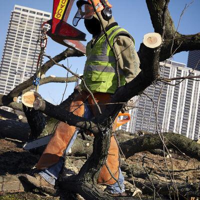 Kate Joyce, 'Tree Removal, Chicago, Illinois', 2012