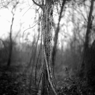 Brandon Thibodeaux, 'Pecan Grove, Bo Bo, Mississippi', 2010