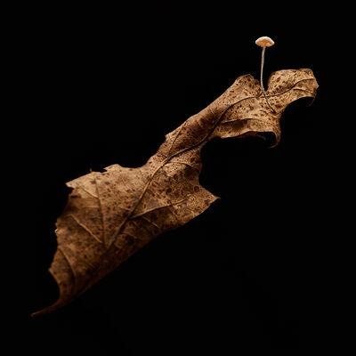 Dan Peterson, 'Leaf', 2013