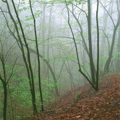 Jeffrey Vaughn, 'Ravine in Fog', 2015