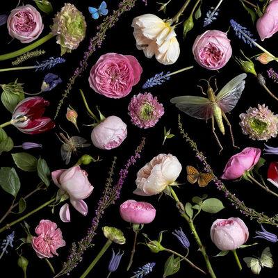 Paulette Tavormina, 'Botanical VI, Juliet Roses', 2013