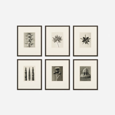 Karl Blossfeldt, 'Six Works from Wundergarten Der Natur', 1932