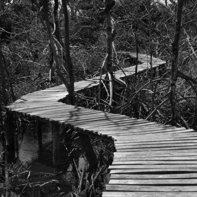 Javier Hinojosa, 'Río Lagartos, Yucatán', 2003