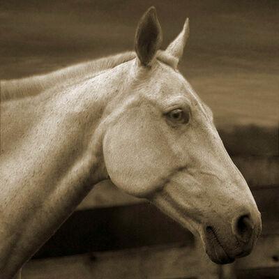 Michael Eastman, 'Horse 4', 2000