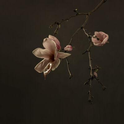 Marie Cecile Thijs, 'Magnolia', 2018