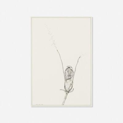 Ernesto Caivano, 'Floral Veins and Conduits: 088', 2006