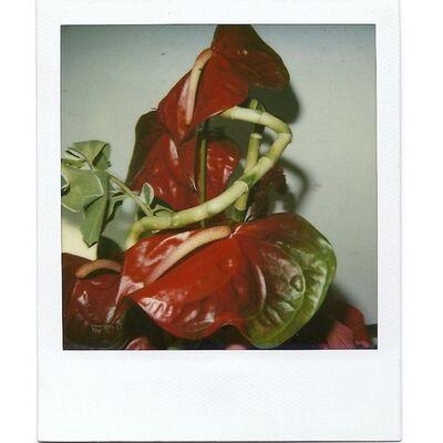 Nobuyoshi Araki, 'Flower', 2000-2005