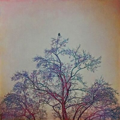 Yasushi Ikejiri, 'Crow', 2016