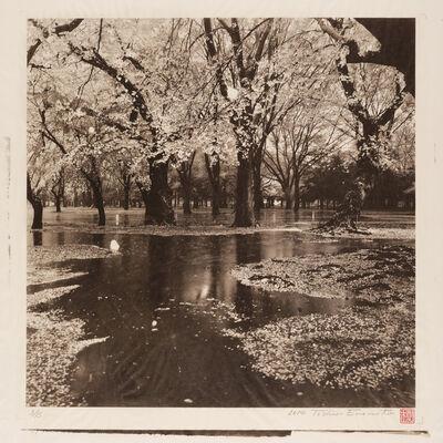 Toshio Enomoto, 'Cherry Tree Wood in Yoyogi Park after a Spring Storm, Tokyo', 2014