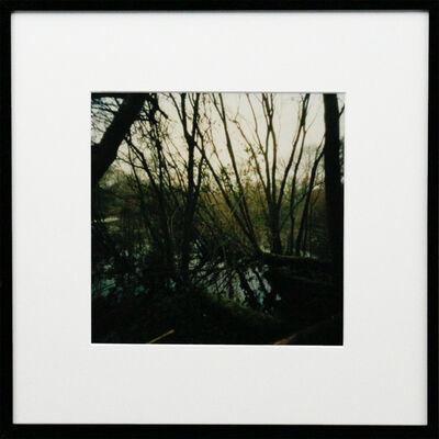 Dianne Bos, 'Pool of Peace, Spanbroeken Crater, Trees, Flanders', 2015