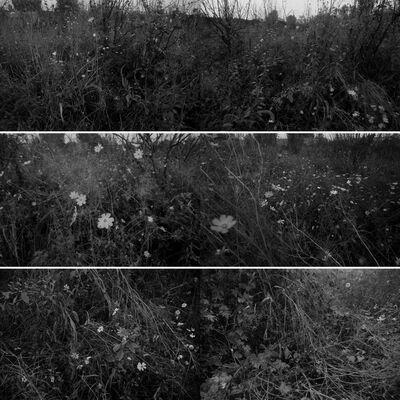 Wang Youshen, 'Per Square Meter·My Landscape 4 每平米·我的风景4', 2010-2011
