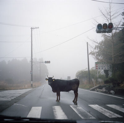 Daichi Koda, 'Oblivion Fukushima #01', 2012