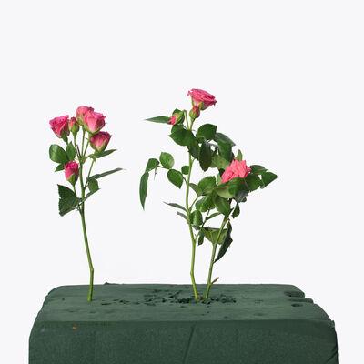 Inez & Vinoodh, '3 Baby Pink Roses, 2013', 2013