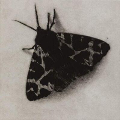 Sarah Gillespie, 'Garden Tiger Moth', 2019